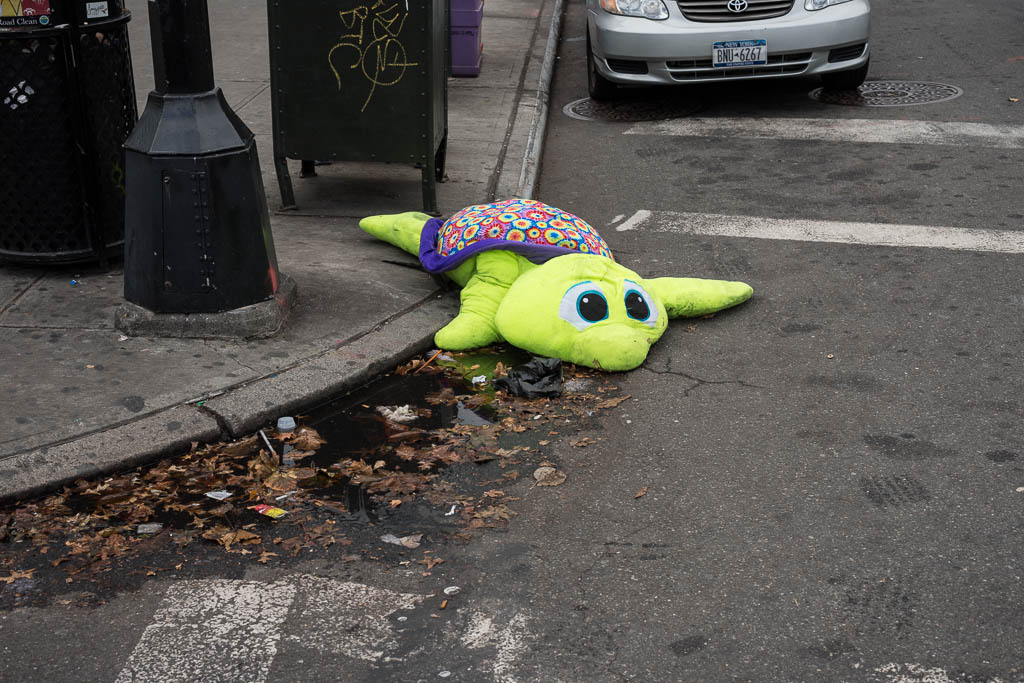 Sad dead turtle, Brooklyn